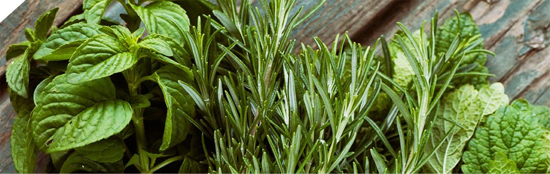 Herbs profile