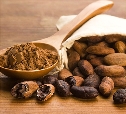 cacao powder chocolate health benefits